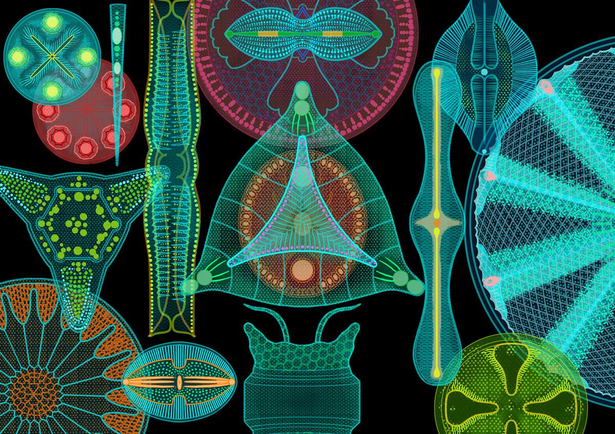 lfs_horizon_diatomes